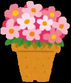 鉢植えでの栽培が可能