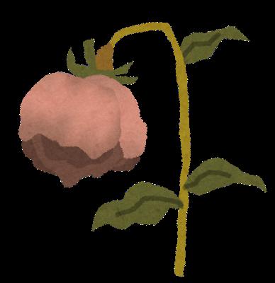 果樹栽培ブログのデメリット